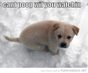 funny-cute-puppy-dog-snow-cant-poop-watching-pics