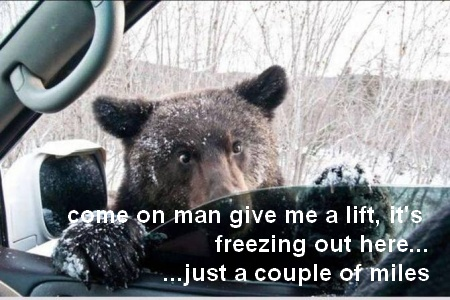 funny-hitchhiking-bear